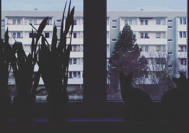 Foto: pineappili